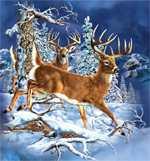 Стивен Гарднер - Картинки - загадки - 11 оленей.
